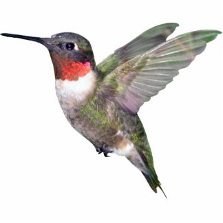 Hummingbird Christmas Ornament Photo Sculpture Ornament