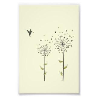 Hummingbird & Dandelion Art Photo