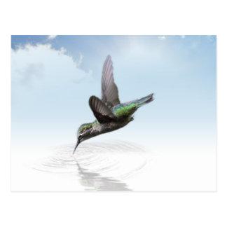 Hummingbird diving into water illustration postcard