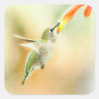 Hummingbird early morning flight square sticker