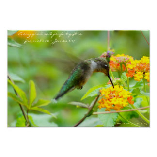 Hummingbird  ~ Every good and perfect gift... Poster