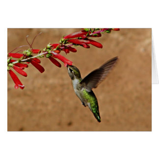 Hummingbird feeding at the Garden Card