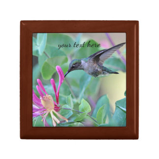 Hummingbird feeding on honeysuckle gift box