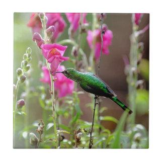 Hummingbird feeding on nectar tile