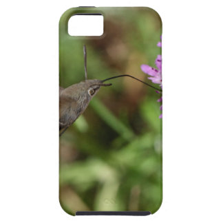 Hummingbird hawk-moth (Macroglossum stellatarum) iPhone 5 Case