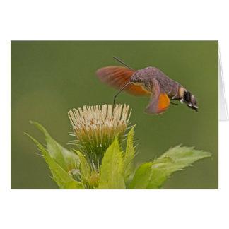 Hummingbird-Hawk Moth Note Card, envelopes incl. Card