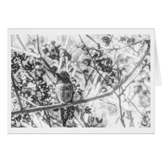 Hummingbird in Black and White Blank Card