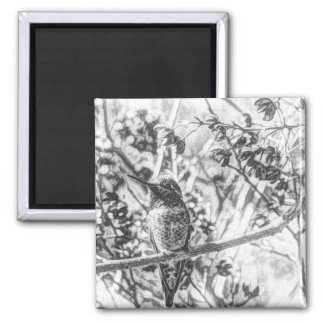 Hummingbird in Black and White Magnet