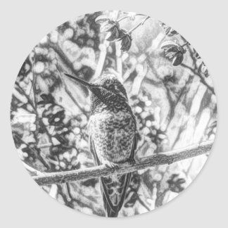 Hummingbird in Black and White Stickers