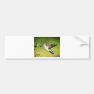 Hummingbird in flight bumper sticker