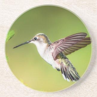 Hummingbird in flight coaster