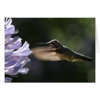 Hummingbird In Flight Greeting Card