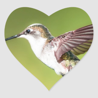 Hummingbird in flight heart sticker