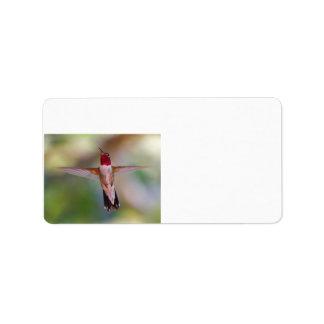 hummingbird in flight label