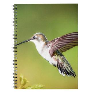 Hummingbird in flight notebook