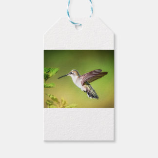 Hummingbird in flight pack of gift tags