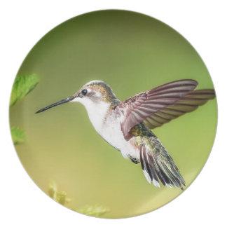 Hummingbird in flight plate
