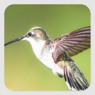 Hummingbird in flight square sticker