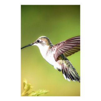 Hummingbird in flight stationery