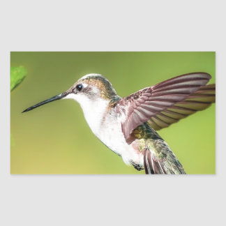 Hummingbird in flight sticker