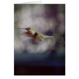 Hummingbird Inflight Card