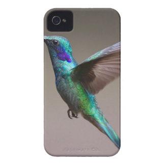 Hummingbird iPhone 4 Cover