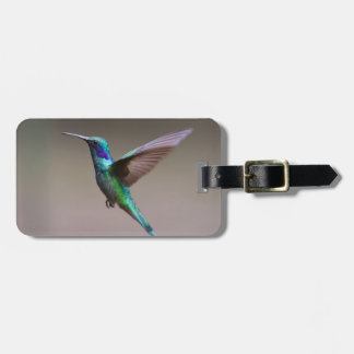 hummingbird luggage tag