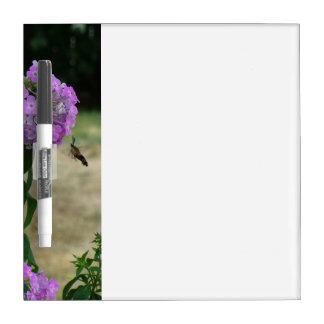 Hummingbird message board