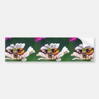 Hummingbird Moth Bumper Sticker