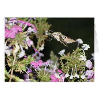 Hummingbird Moth & Phlox Card