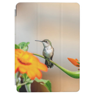 Hummingbird on a flowering plant