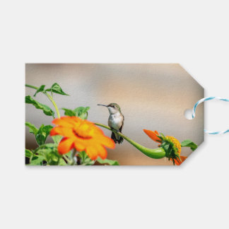 Hummingbird on a flowering plant gift tags