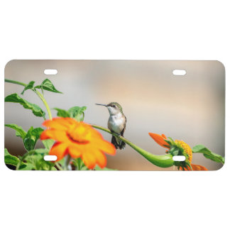 Hummingbird on a flowering plant license plate