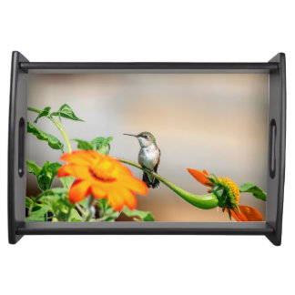 Hummingbird on a flowering plant serving tray