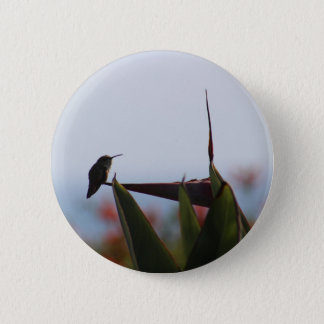 Hummingbird on Bird-of-Paradise Flower Button