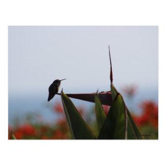 Hummingbird on Bird-of-Paradise Flower Postcard