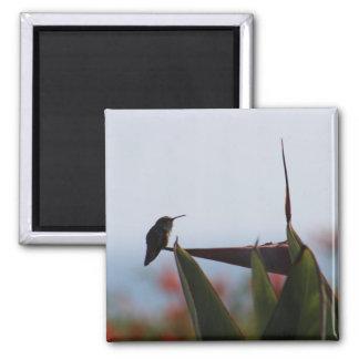 Hummingbird on Bird-of-Paradise Photo Magnet