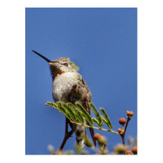 Hummingbird on Branch by SnapDaddy Postcard