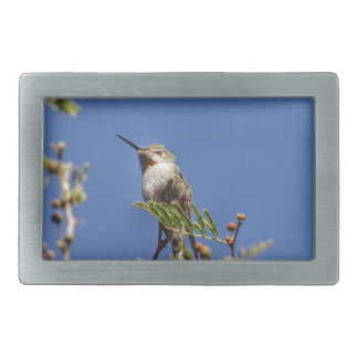 Hummingbird on Branch by SnapDaddy Rectangular Belt Buckles