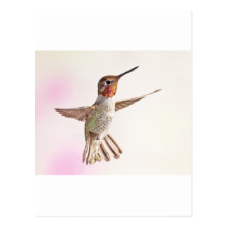 Hummingbird on Pink Postcard