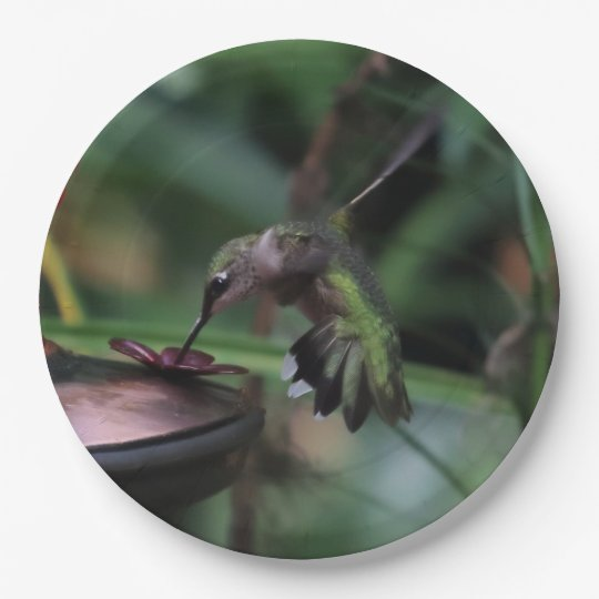 Hummingbird, Paper Plates. 9 Inch Paper Plate