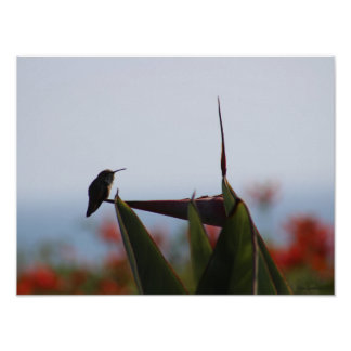 Hummingbird Photo 16x12 Archival Matte Poster