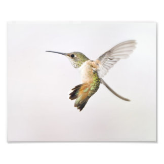 Hummingbird Photo Print