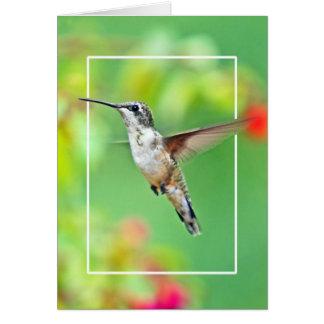 Hummingbird Photograph Card