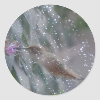 Hummingbird - playing in the rain classic round sticker