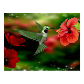 Hummingbird postcard
