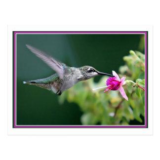 Hummingbird Postcard