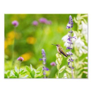 Hummingbird Rest Photo Print