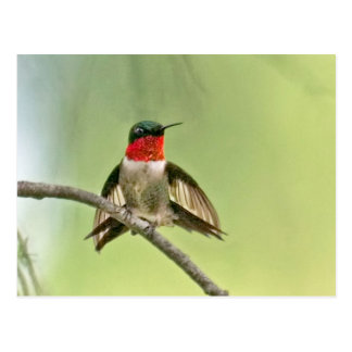 Hummingbird Settling on a Branch Postcard