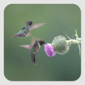 Hummingbird Square Sticker